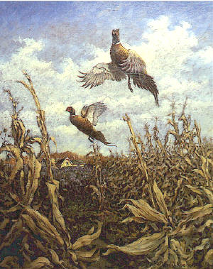 Pheasants by William J Koelpin
